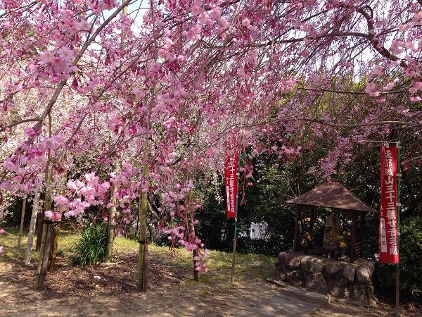 I viaggi floreali in Giappone sono esperienza della cultura locale: ammirare i ciliegi in fiore per i giapponesi si dice hanami.