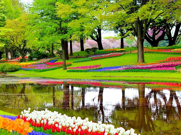 Infine: viaggi floreali in Olanda per ammirare le 800 specie di tulipani del parco Keukenhof.
