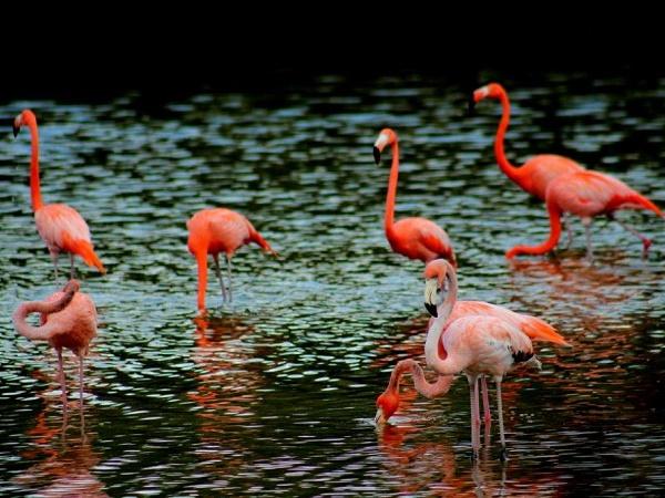 Cuba: i fenicotteri rosa di Cayo Coco