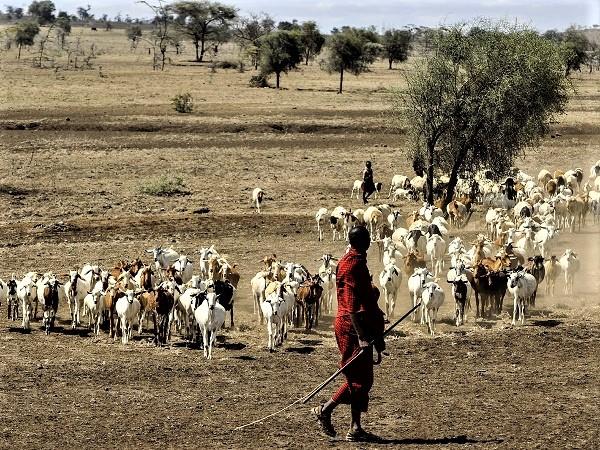 I Masai sono pastori transumanti e sono il simbolo dell'equilibrio uono- natura che caratterizza la Tanzania.