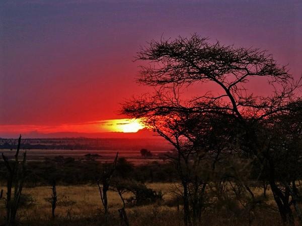 Colori del tramonto nel parco del Serengeti, in Tanzania.