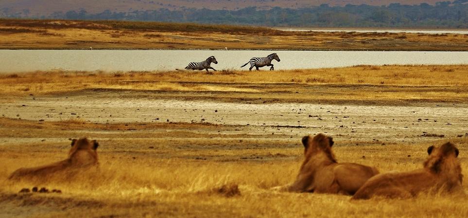 I safari in Tanzania consentono grandi incontri, per questo è essenziale la presenza di guide esperte.