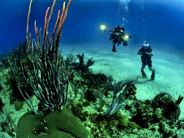 """Chasing coral porta a scoprire il mondo """"extraterrestre"""" che affascina gli appassionati di subacquea."""