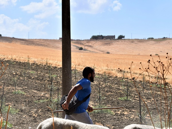 Sulla strada per Poggioreale, Qua e là qualche casolare, un pastore con il suo gregge a lato della strada.