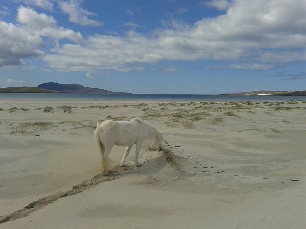 L'incontro vissuto con maggiore eccitazione sulle Isole Ebridi è stato quello con l'oceano.