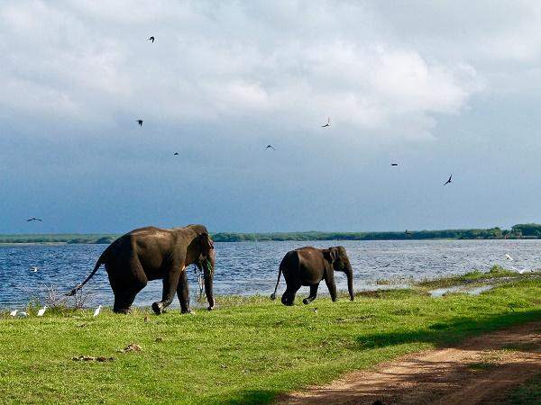 A Yala si estende un parco nazionale che consiste di 5 blocchi, di cui solo 2 aperti al pubblico. Qui è possibile prendere parte a un safari a bordo di una jeep.