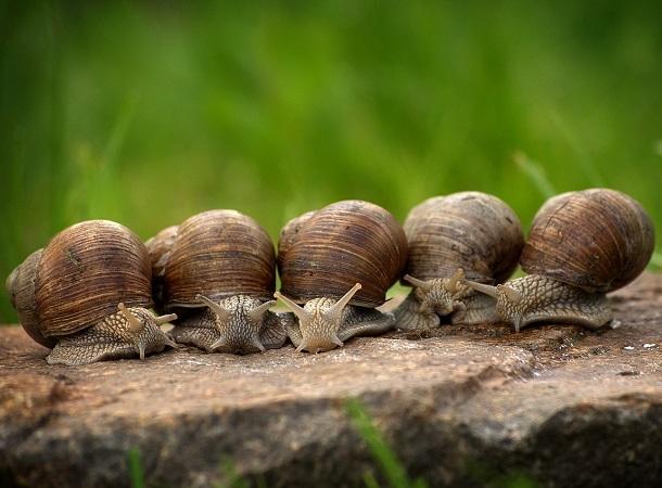 La tribù del viaggio lento raccoglie chi ama muoversi senza limiti di tempo, di mete e di prenotazioni, superando gli ostacoli che incontra sul cammino.