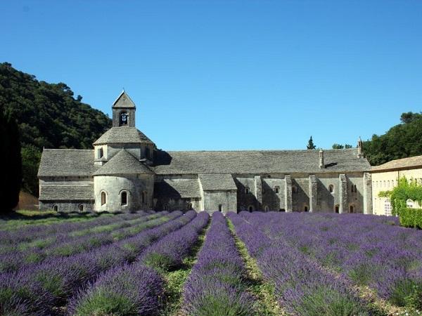 L'abbazia di Senanque è l'immagine più famosa della lavanda provenzale.