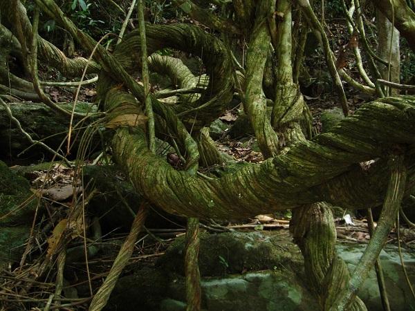 Nel Nord del Brasile predomina il cuore verde della Foresta Amazzonica.