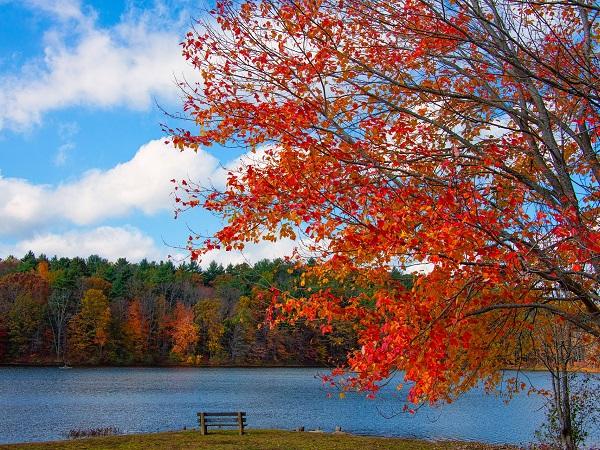 C'è chi è indeciso tra luoghi vicini e lontani, come l'autunno nel New England.