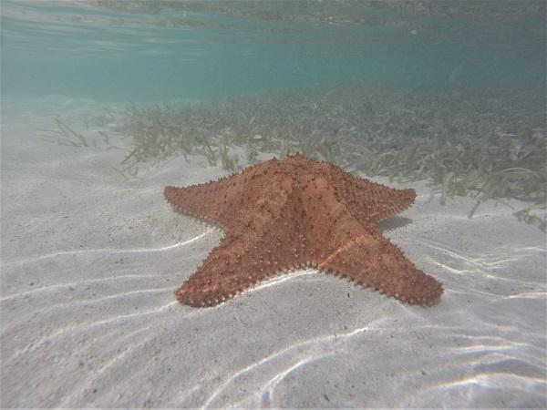 Una piscina naturale nel mezzo dell'oceano, acqua chiarissima circondata da mare blu intenso, nella quale è possibile ammirare stelle marine di ogni dimensione.