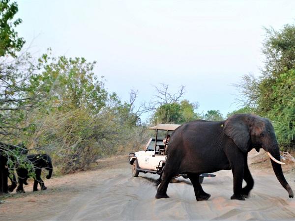 Safari in self drive o guidato da ranger? Non c'è una risposta migliore e ogni tipo di esperienza hai i suoi punti di forza.