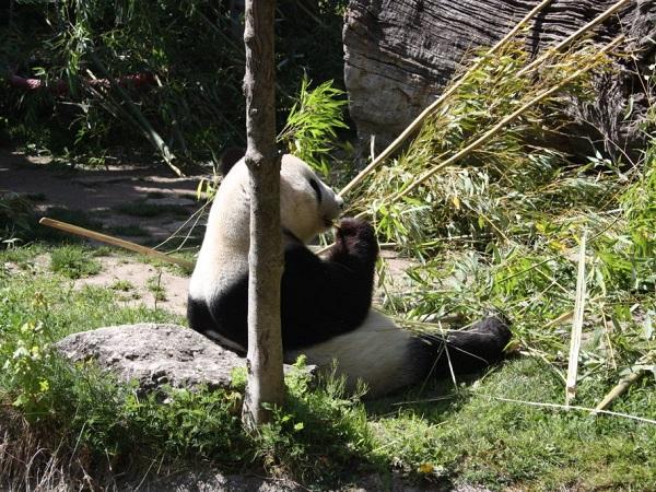 Una giornata intera va dedicata al castello di Schönbrunn e all'immenso parco con tanto di fontane, labirinto e zoo, famoso in particolare per la presenza del panda gigante.