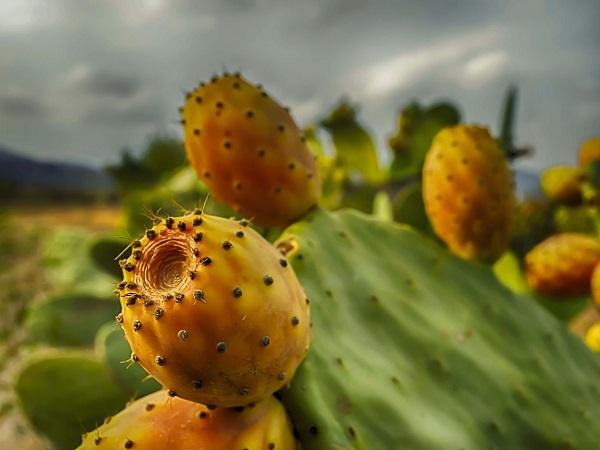 Alcuni luoghi di Favignana richiamano zone aride messicane con la loro terra rossa, le strade non asfaltate, le radure circondate da grandi cactus. Poi in lontananza compare un personaggio con coppola in testa e la fantasia immediatamente svanisce.