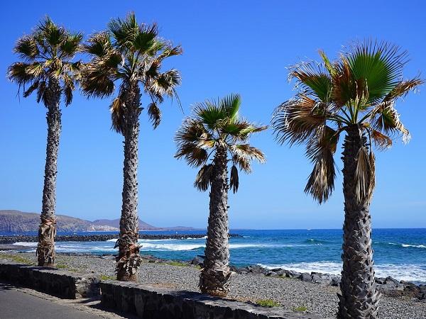 In vista del Natale consiglio Tenerife: volo di medio raggio e destinazione che garantisce temperature ottimali anche per chi ha problemi di termoregolazione. E poi, dopo più di vent'anni di investimenti per rendere l'isola accessibile, i risultati si vedono.