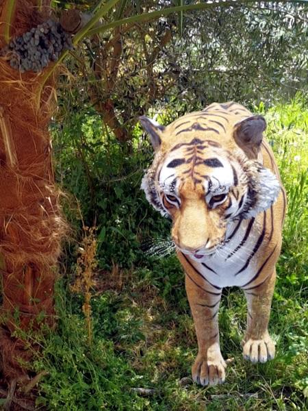 Tra una palma e un ulivo si nasconde un'enorme tigre (Panthera tigris). Ma a differenza dei due animali precedenti, questa non ci spaventa, perché è innocua, ce ne rendiamo subito conto.