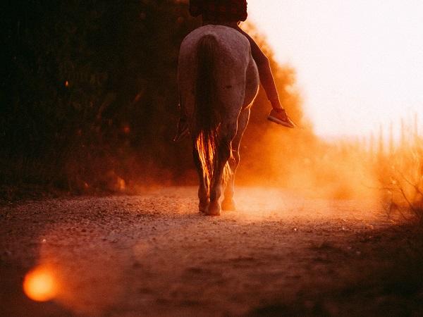 Per chi vuole il viaggio infinito ed è incazzato con il COVID-19 e non sa come sfogarsi, abbiamo una proposta: un viaggio a cavallo, ma delle parole.