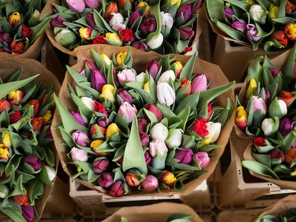 Il Museo dei tulipani di Amsterdam svela la scoperta del fiore da parte dei mercanti ottomani nelle steppe himalayane