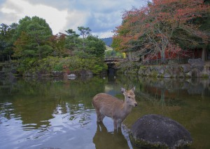 Osaka - Nara - Kyoto.jpg