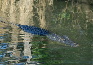 Cooinda - Pine Creek – Darwin (390 Km).jpg