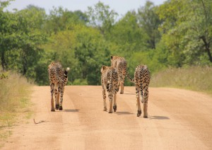 Safari Presso Olinfant River.jpg