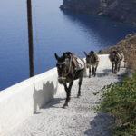 """I """"taxi"""" di Santorini"""
