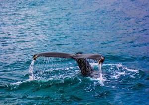 Perth / Crociera Whale Watching.jpg