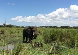 Murchison Falls National Park - Kampala.jpg