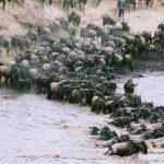 Mandria di bufali