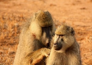Arrivo Al Selous Game Reserve.jpg