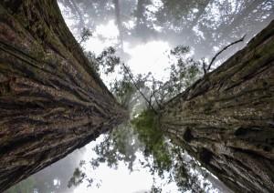 Oakhurst - Sequoia National Park (200 Km / 2h 5min) - Three Rivers (10 Km / 10min).jpg