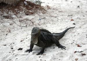 (23/05/2019) Trinidad - Cayo Iguanas.jpg