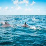 Nuotare con i delfini: entusiasmante!