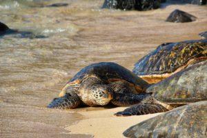Le tartarughe saranno compagne del vostro viaggio