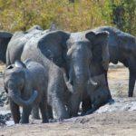 Elefanti al bagno