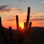Il deserto della Baja California Sud
