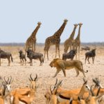 Avvistamenti durate il Safari