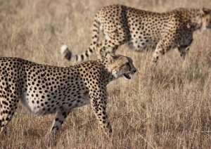 Etosha National Park.jpg