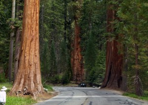 Ridgecrest - Sequoia National Park - Visalia (315 Km / 3h 40min).jpg