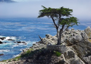 Yosemite - Monterey - Carmel (250km / 2h 45min).jpg
