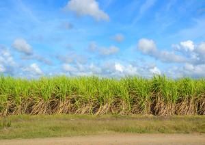 Trinidad / Escursione Alla Valle De Los Ingenios.jpg