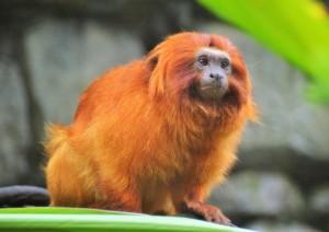 Trekking Golden Monkey - Lake Bunyonyi.jpg