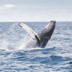 Avvistamento delle balene