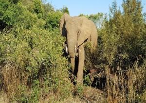Cape Town (volo) Johannesburg - Pilanesberg National Park Area (2h).jpg