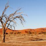 I colori rossi del Kalahari