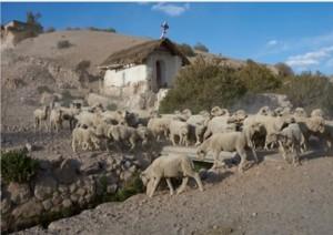 Arica - Putre (140 Km).jpg