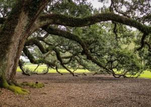 New Orleans: Tour Oak Plantation.jpg