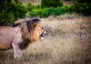 Hermanus - Cape Town (volo) Kruger National Park.jpg