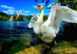 Arrivo Al Lago Di Bled.jpg