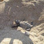 piccolo tartaruga